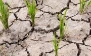 Pomoc dla rolinków w związku z wystąpieniem suszy lub powodzi.